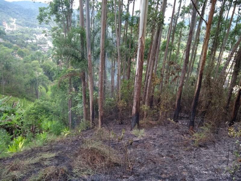 Fogo em área de reflorestamento de Guabiruba